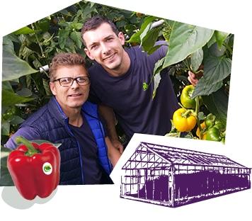 Portrait de deux producteurs dans la serre entouré des pieds de poivron.