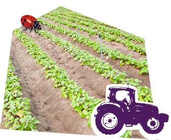 Le savoir-faire des producteurs de pommes de terre bio origine France Kultive