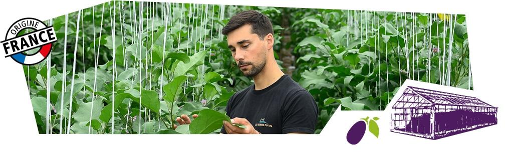 Gros plan sur un producteur dans sa serre au milieu des plans d'aubergine. Logo origine France superposé sur l'image.