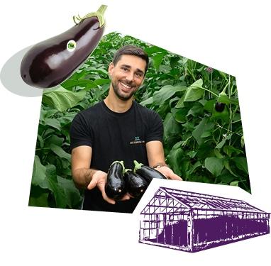 Portrait d'un producteur dans la serre, tenant des aubergines dans ses mains.
