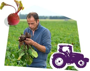 Portrait d'un producteur dans son champ, tenant une botte de betteraves dans ses mains