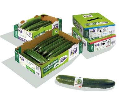 Deux boites en carton, contenant des concombres de calibre 500-600 et plus, accompagnés de leurs couvercles à l'arrière-plan. Un concombre entouré d'une bague en plastique au premier plan.