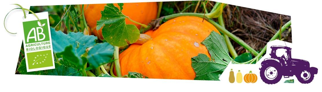 Gros plan sur les potimarrons bio Kultive en train de pousser en plein champ, accompagnés du logo du label Agriculture Biologique superposé sur l'image