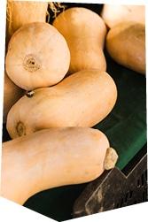 Courges butternuts bio juste après la récolte