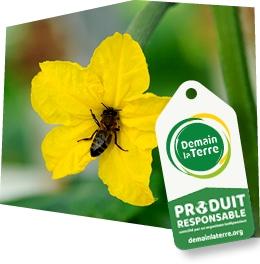 Gros plan sur une fleur de courgette butinée par une abeille, accompagné d'une étiquette Demain la Terre – Produit responsable.