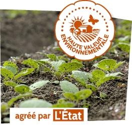 Pousses plantées en plein champ, accompagnées du logo du label Haute Valeur Environnementale, agréé par l'état.