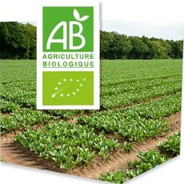 Champs de culture bio, accompagnés du logo du label Agriculture Biologique