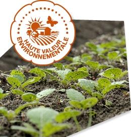 Pousses plantés en plein champ, accompagnés du logo du label Haute Valeur Environnementale