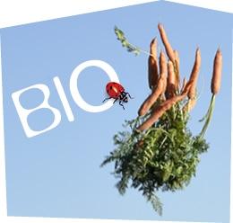 Botte de carotte bio Kultive lancée dans les airs accompagnés du mot « Bio ».