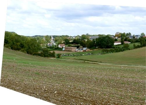 Champ des hauts de France, avec des vaches en train de paître, et un village en arrière-plan