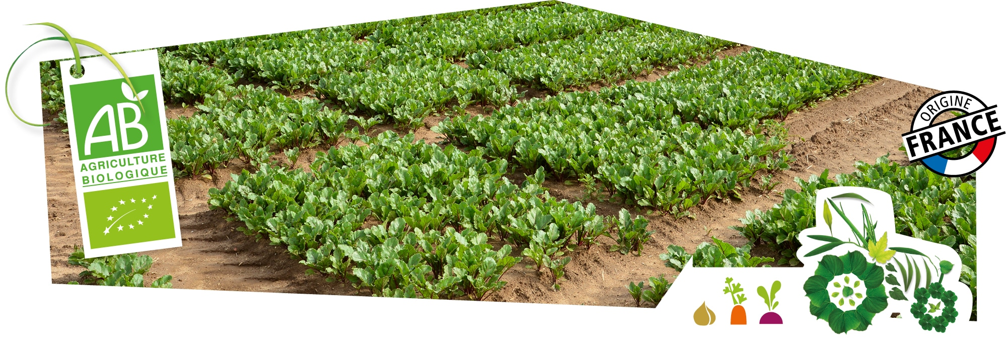 Champs de culture bio Kultive, représentant l'esprit Produire mieux que bien, accompagné du logo du label Agriculture Biologique, superposé sur l'image.