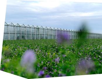 Serres Kultive entourées de fleurs des champs.