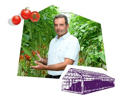 Portrait d'un producteur dans la serre entouré des pieds de tomates-cerises.